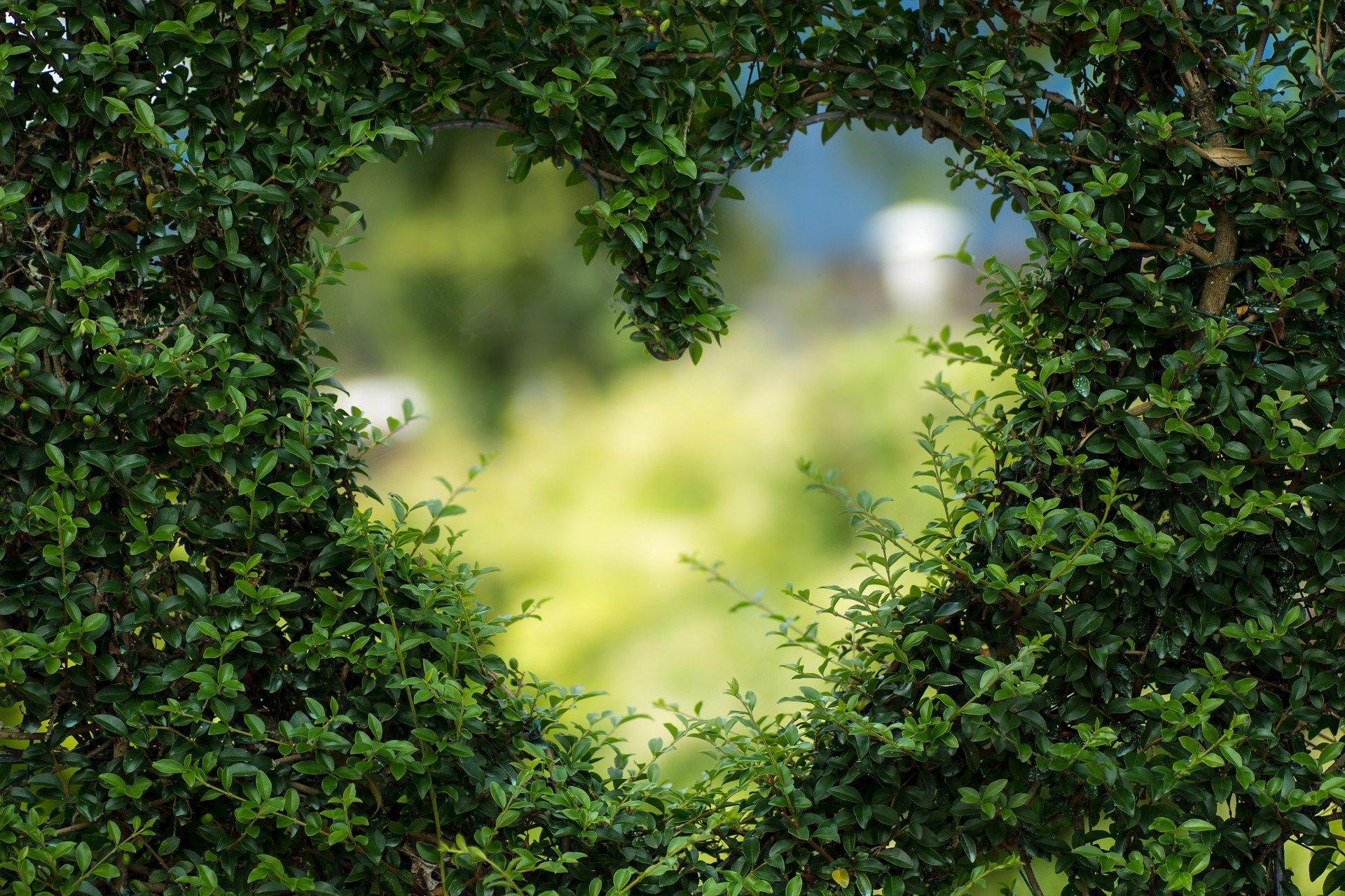 Espaces verts I Apricot Immobilier
